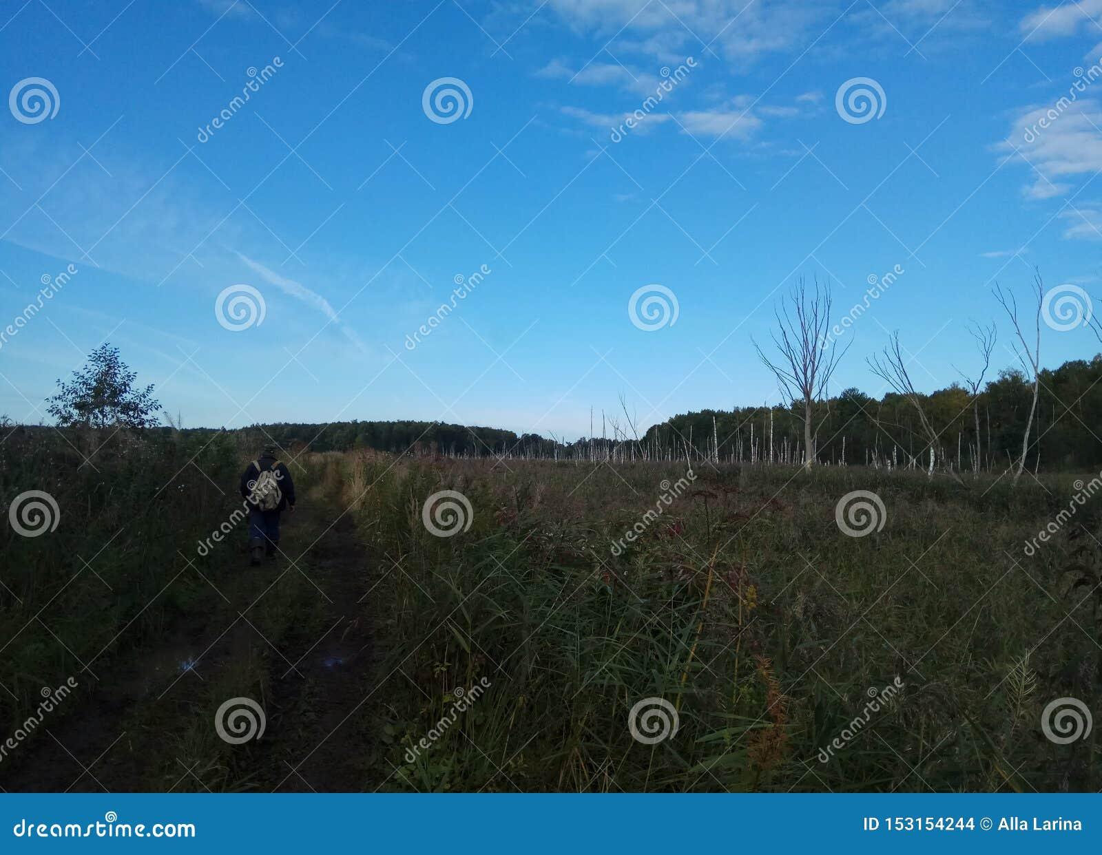 Autunno Paesaggio della foresta Cielo blu ed alberi con le foglie gialle e nessun foglie orizzonte sfondo naturale della Russia