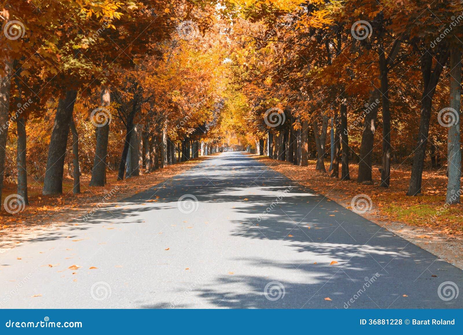 Download Autunno sulla strada fotografia stock. Immagine di aperto - 36881228