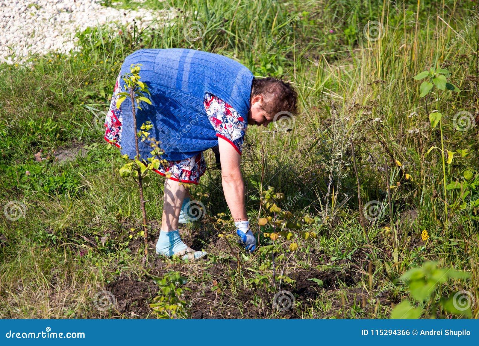 A avó rasga fora a grama no jardim