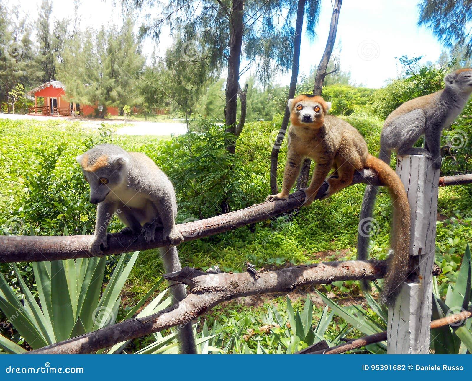 Avant le lancement au Madagascar