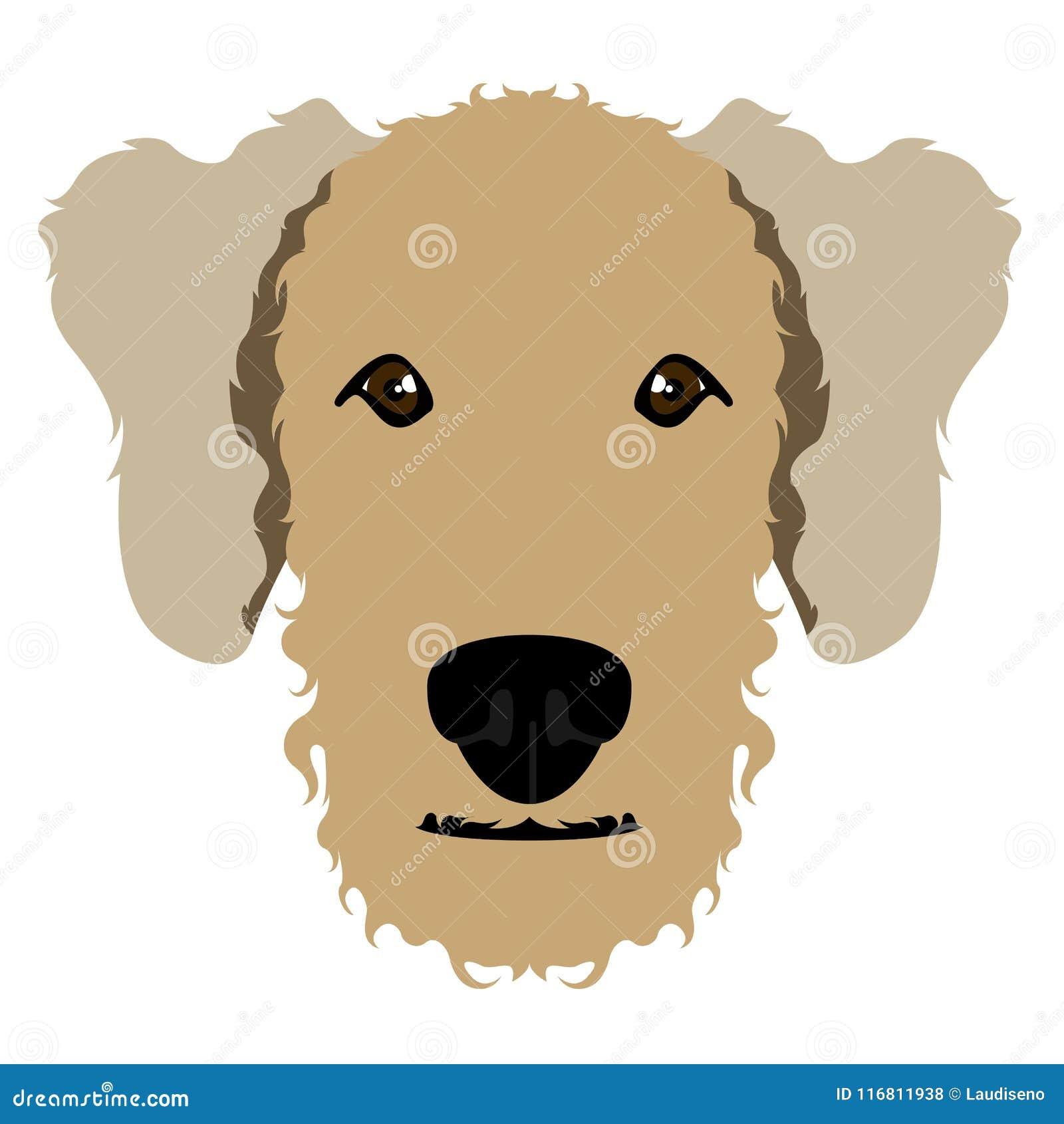 Avatar del terrier di Airedale