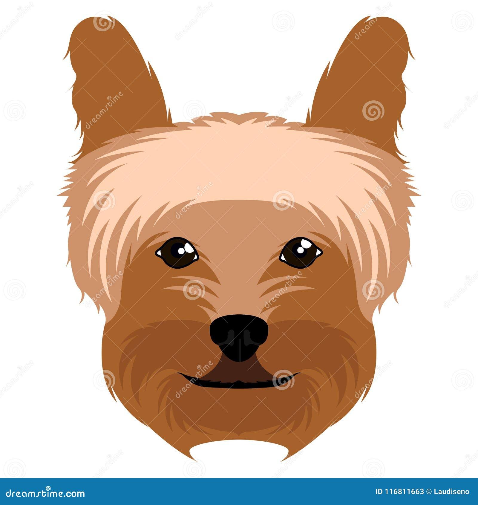 Avatar dell Yorkshire terrier