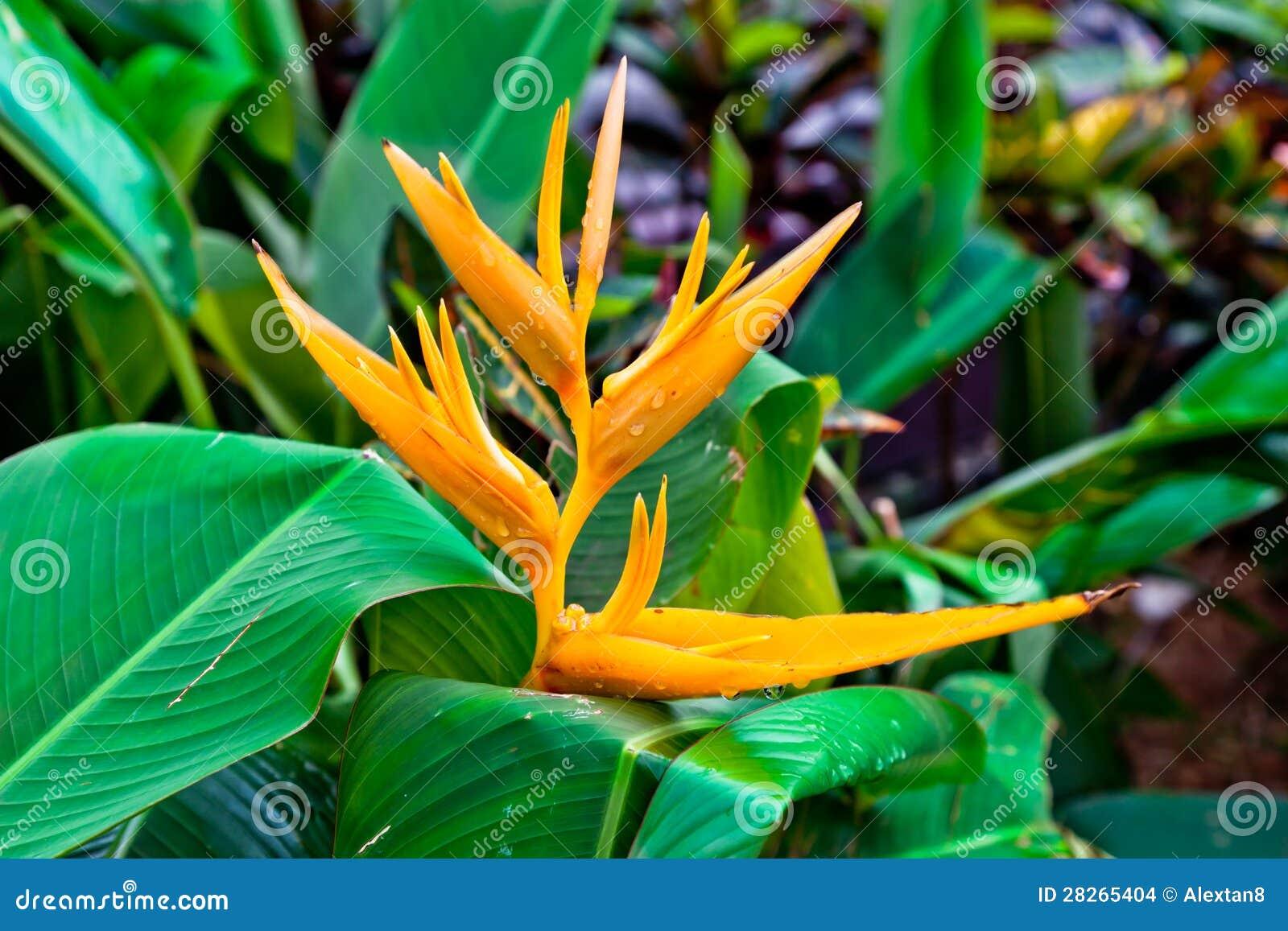 Ave del paraíso de la flor