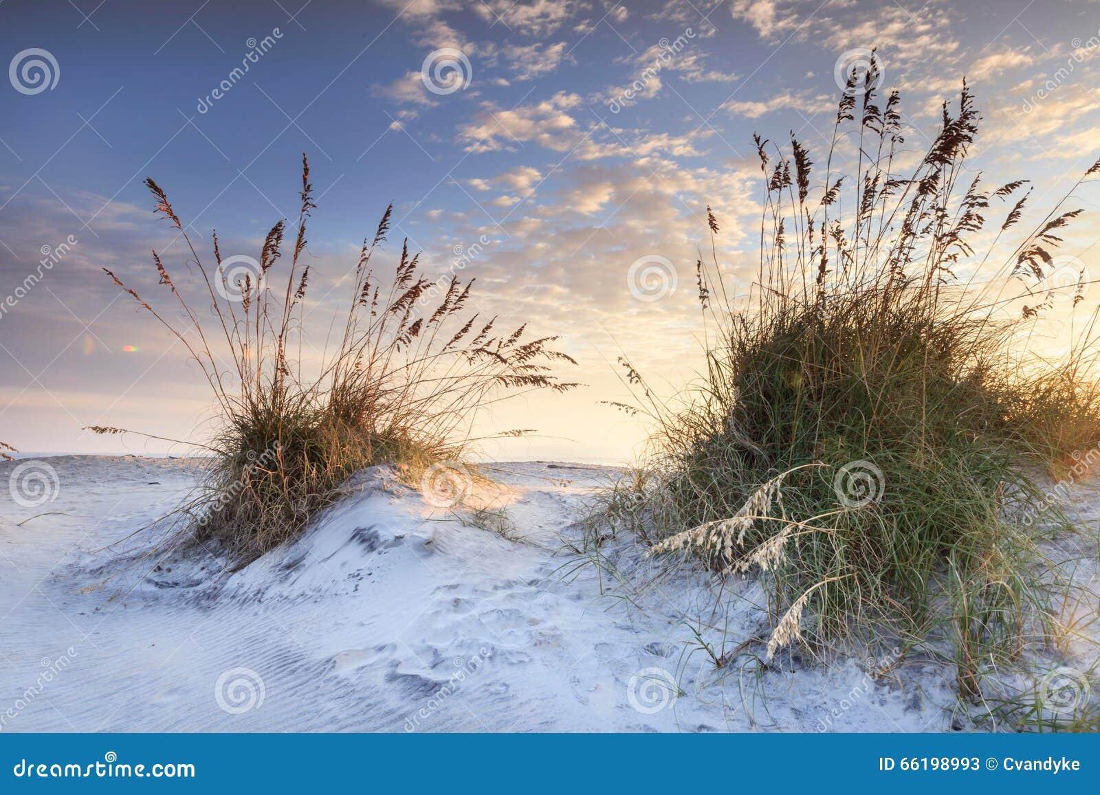 Aveia litoral Carolina Sunrise norte da areia e do mar
