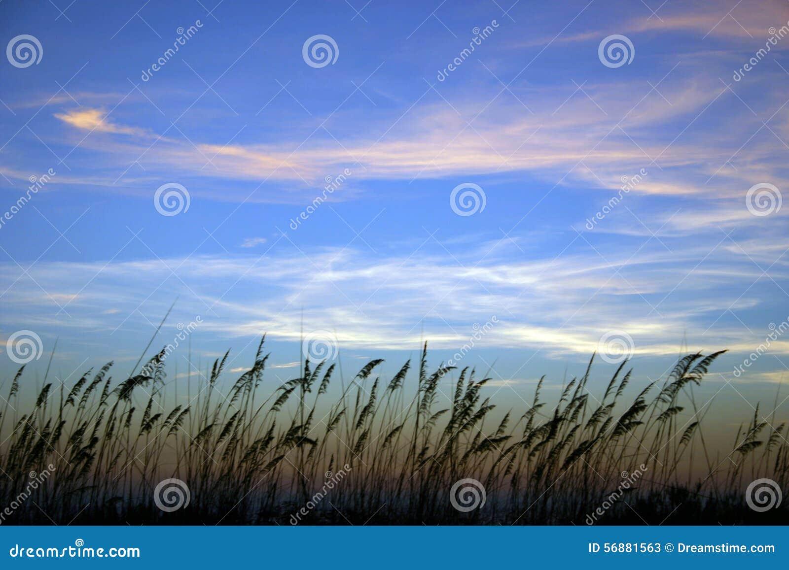 Avena del mare al tramonto con le nuvole di Whispy