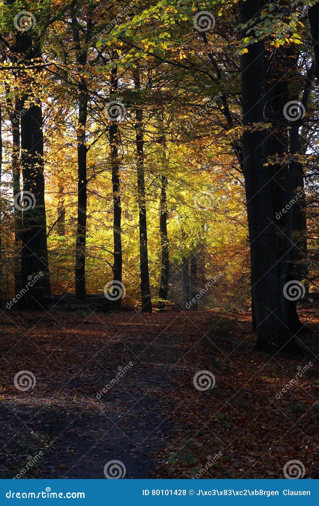 Avenida da floresta nas cores