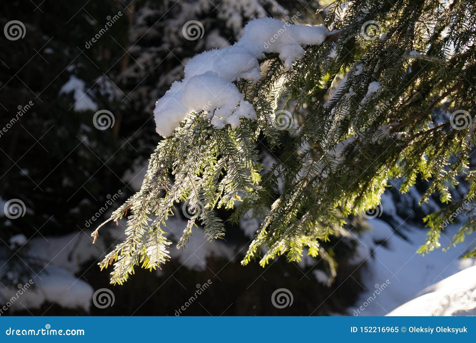 Aventures d hiver Carte des Carpathiens carpathiens l ukraine