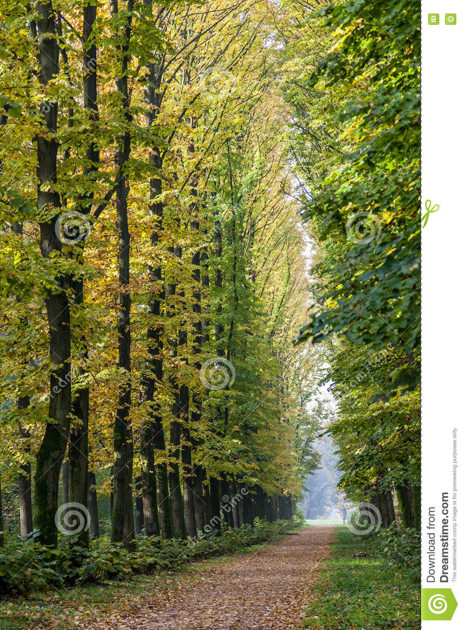 Avenue of Elm trees in Parco di Monza