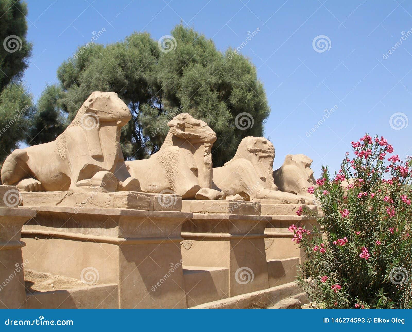 Aveny av dehövdade sfinxerna i den Karnak templet