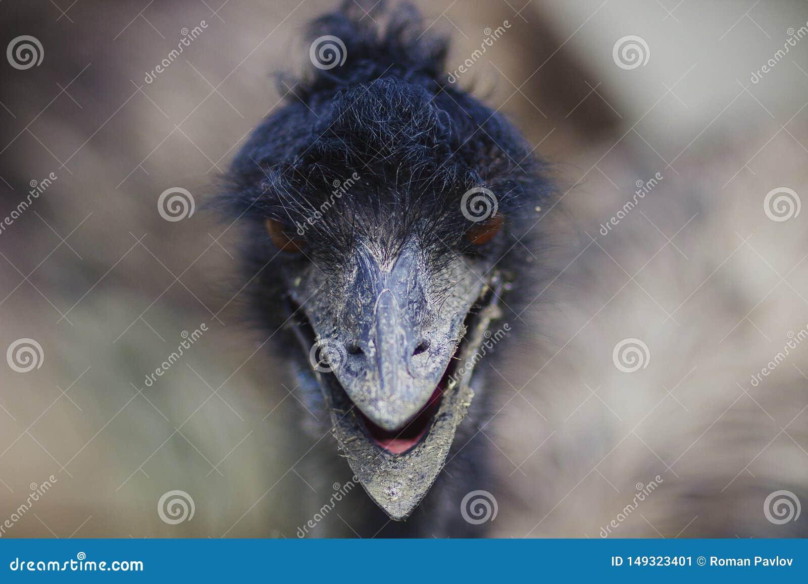 A avestruz m? grande no prado