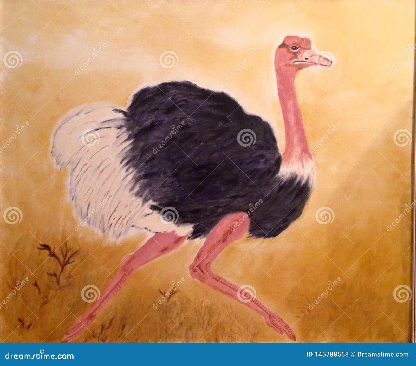 Avestruz, pena branca do preto do pássaro Flightless