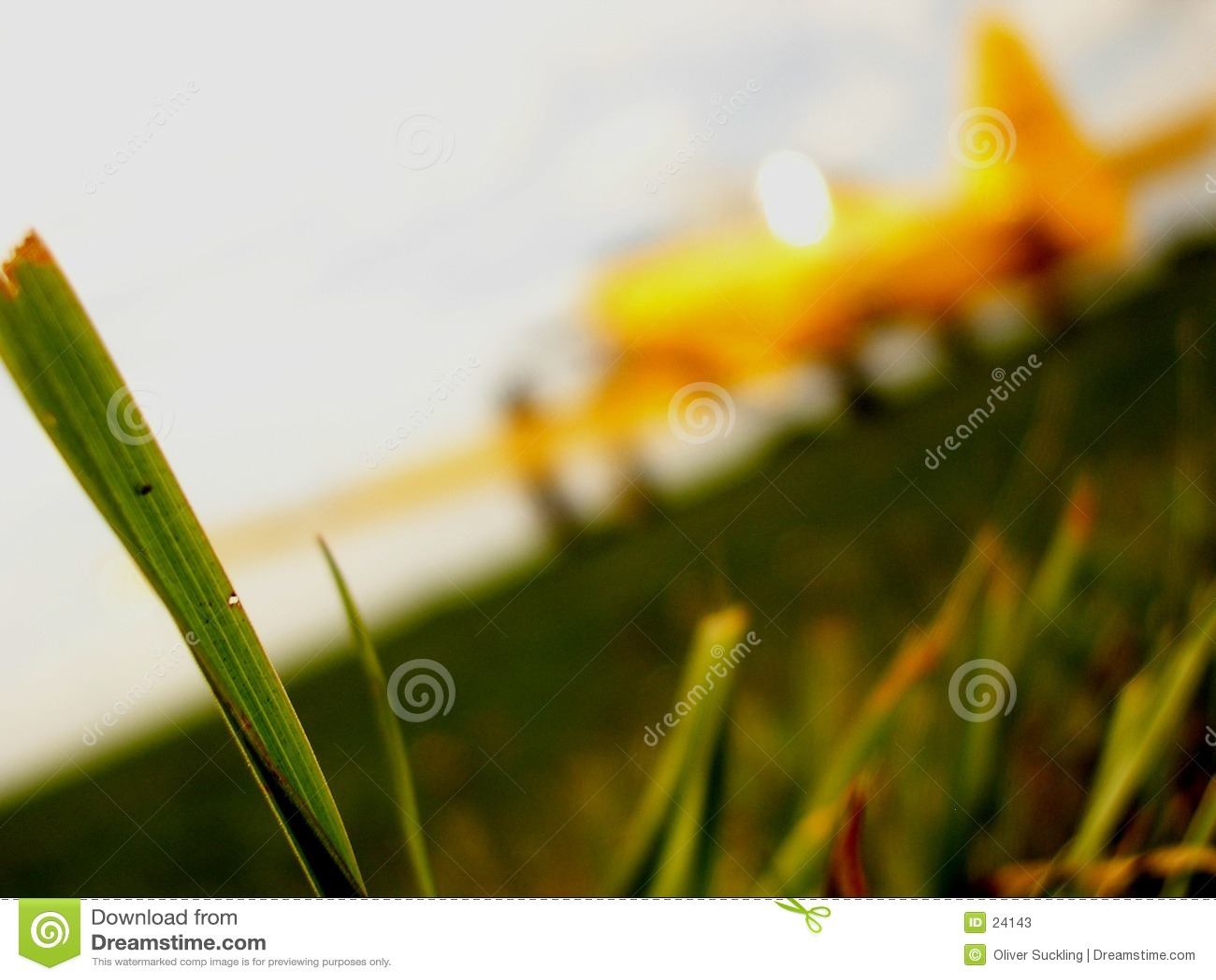 Avión en un cauce de la hierba