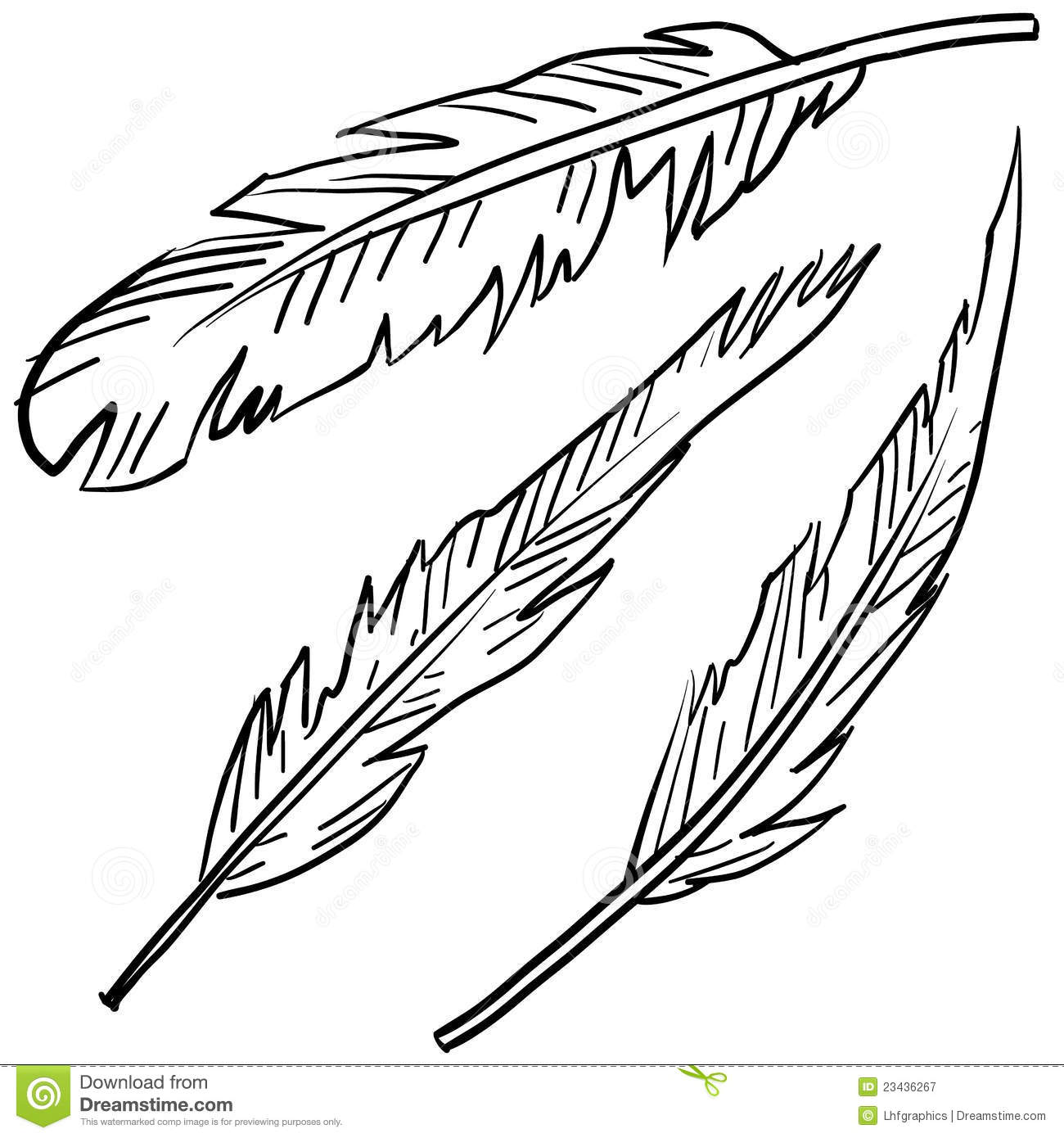 Avian Feathers Sketch Royalty Free Stock Photography - Image: 23436267