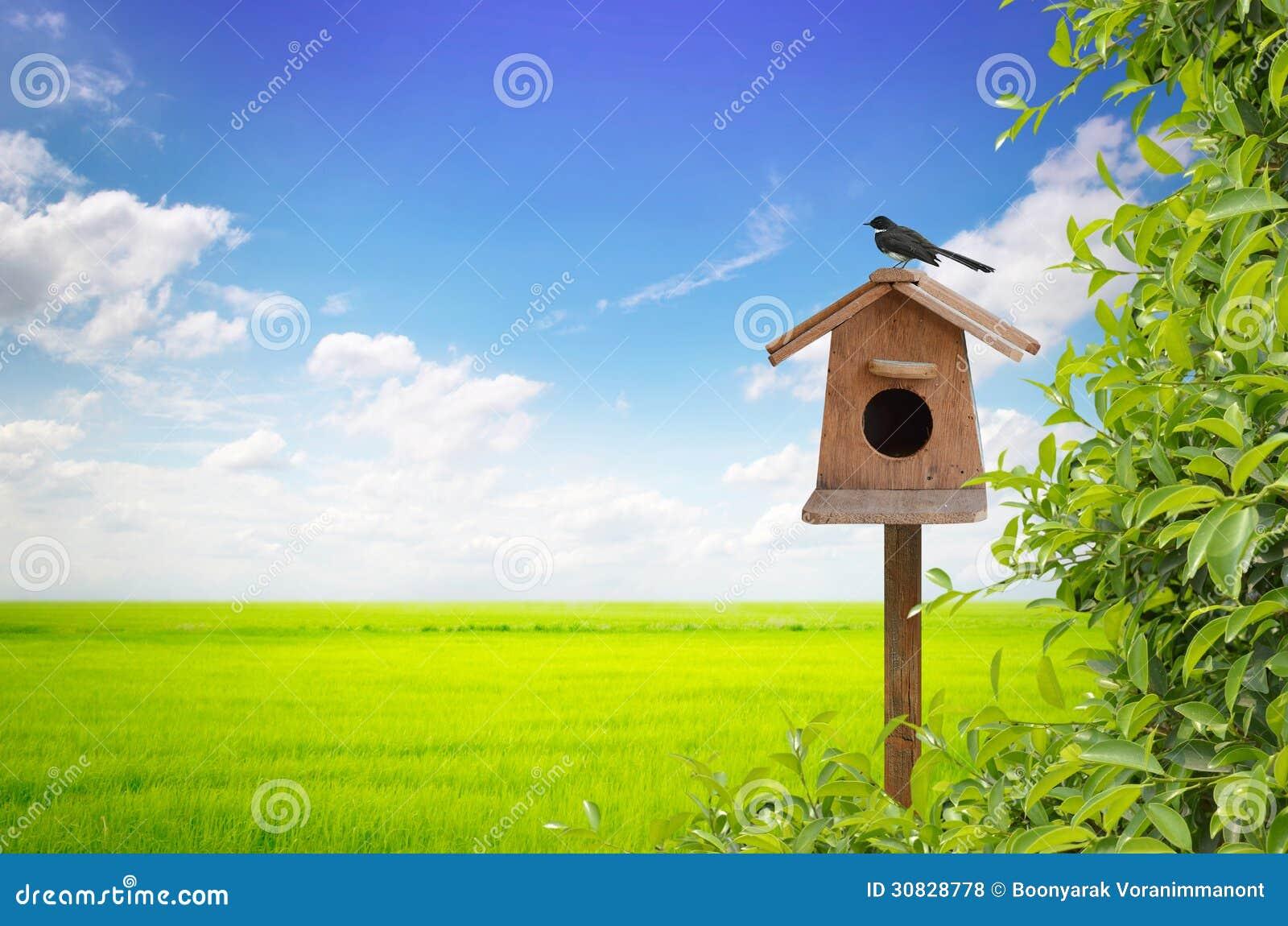 Aviario ed uccello con il prato