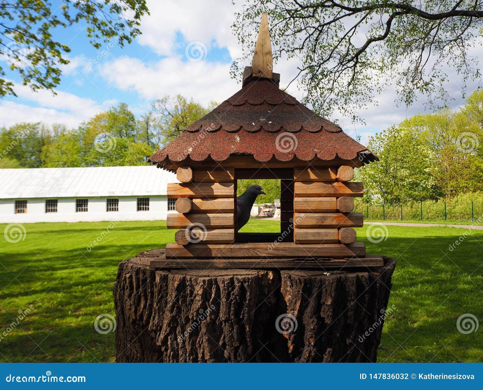 Aviario scolpito di legno su un ceppo di albero, un alimentatore per gli uccelli con un piccione in