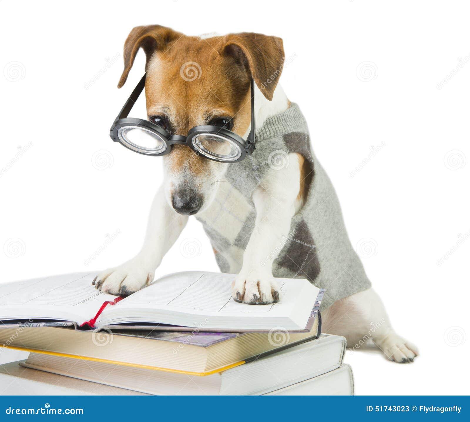 Avid Smart Reader Stock Photo