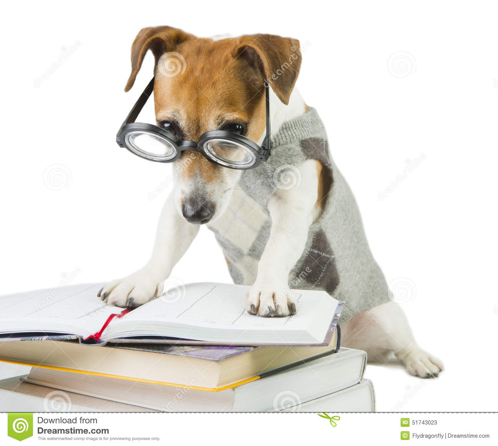 Avid smart reader stock photo image 51743023 for Avid dog