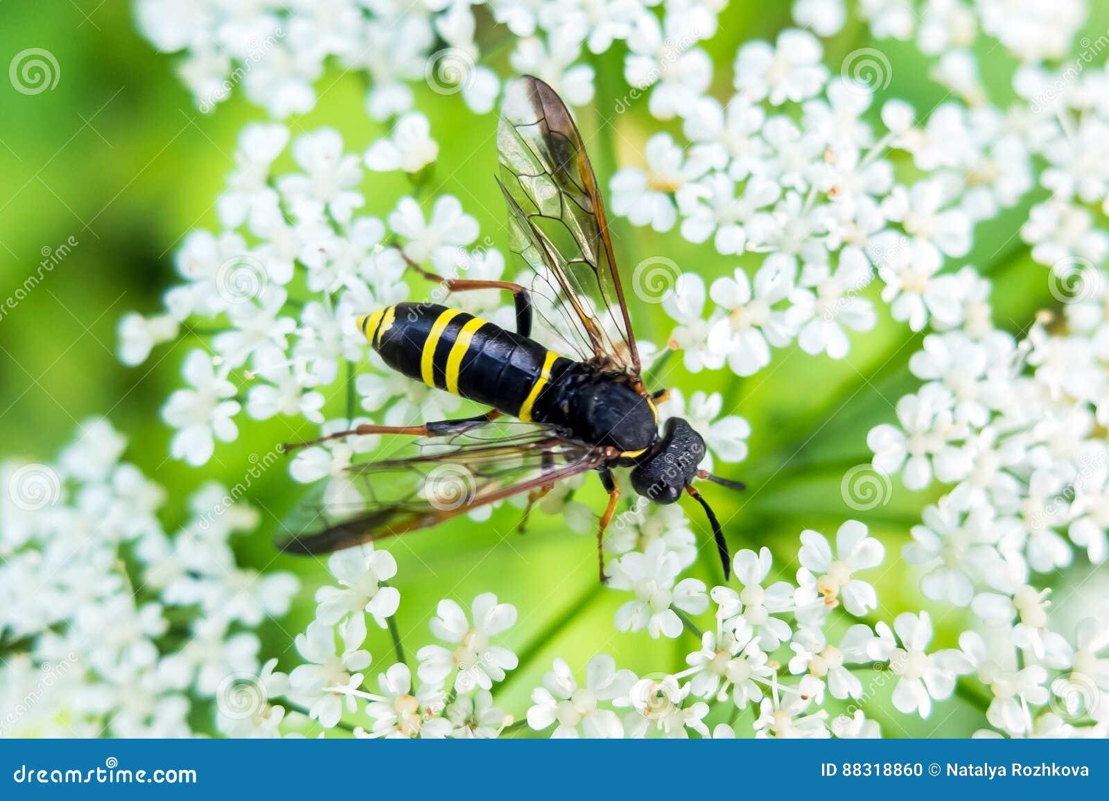 Avispa que come el néctar