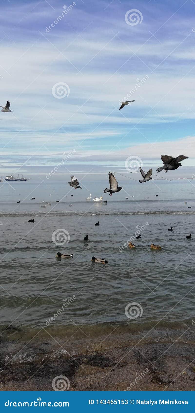 Avkänning av flyget Fåglar på bakgrunden av havet