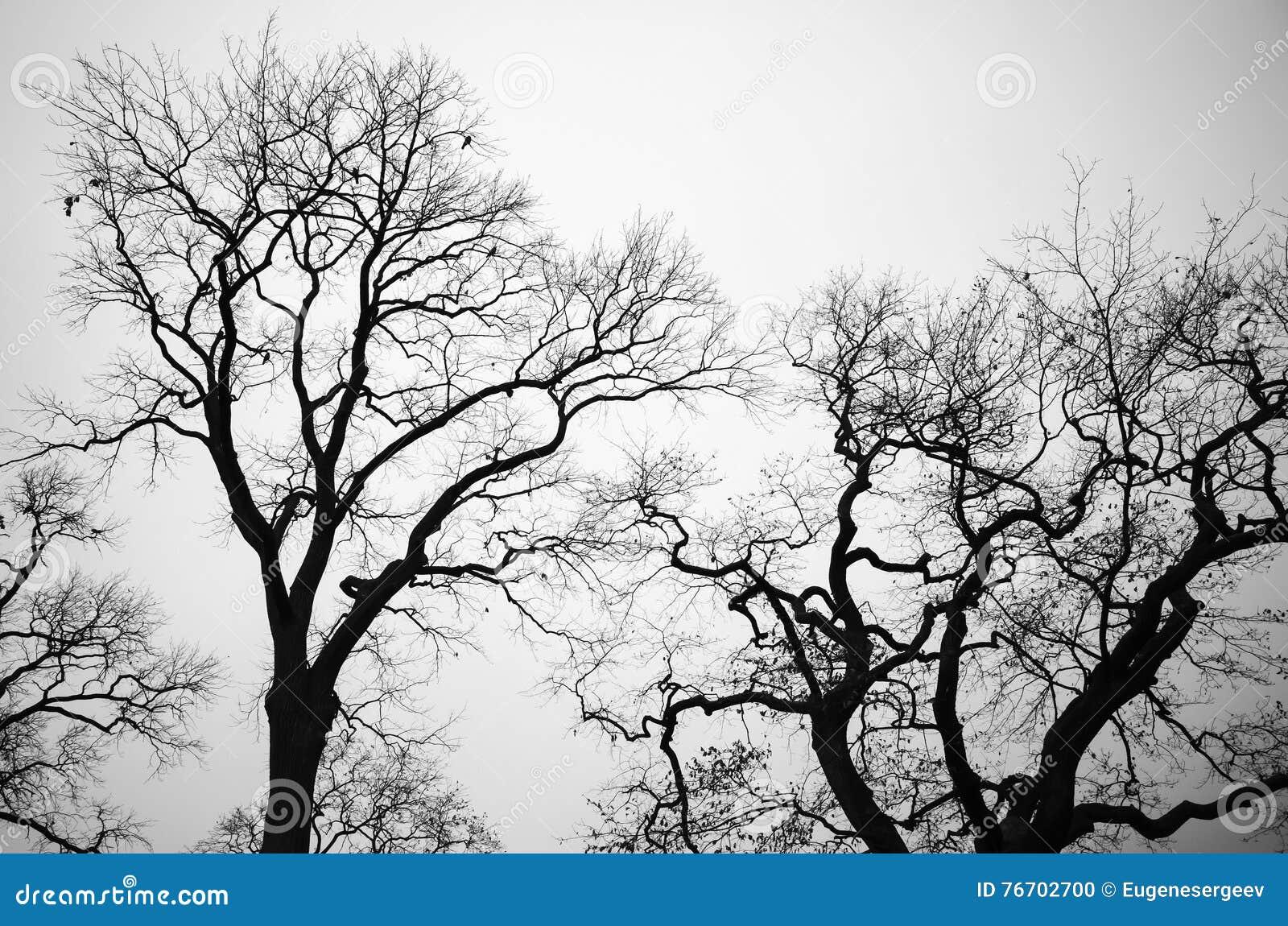 Avlövade kala träd över grå himmelbakgrund