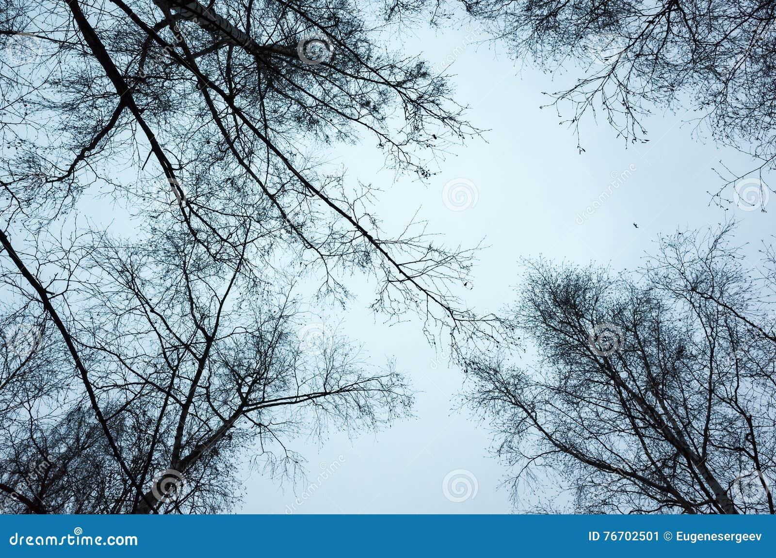 Avlövade kala träd över himmelbakgrund