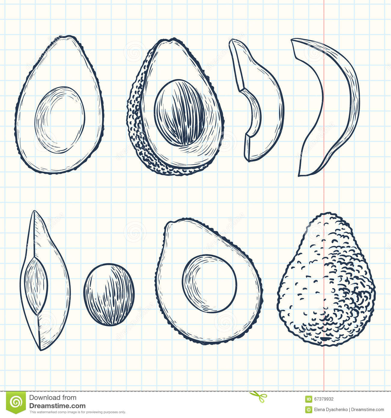 Vector Drawing Lines Html : Avocado stock vector image of retro outline shape