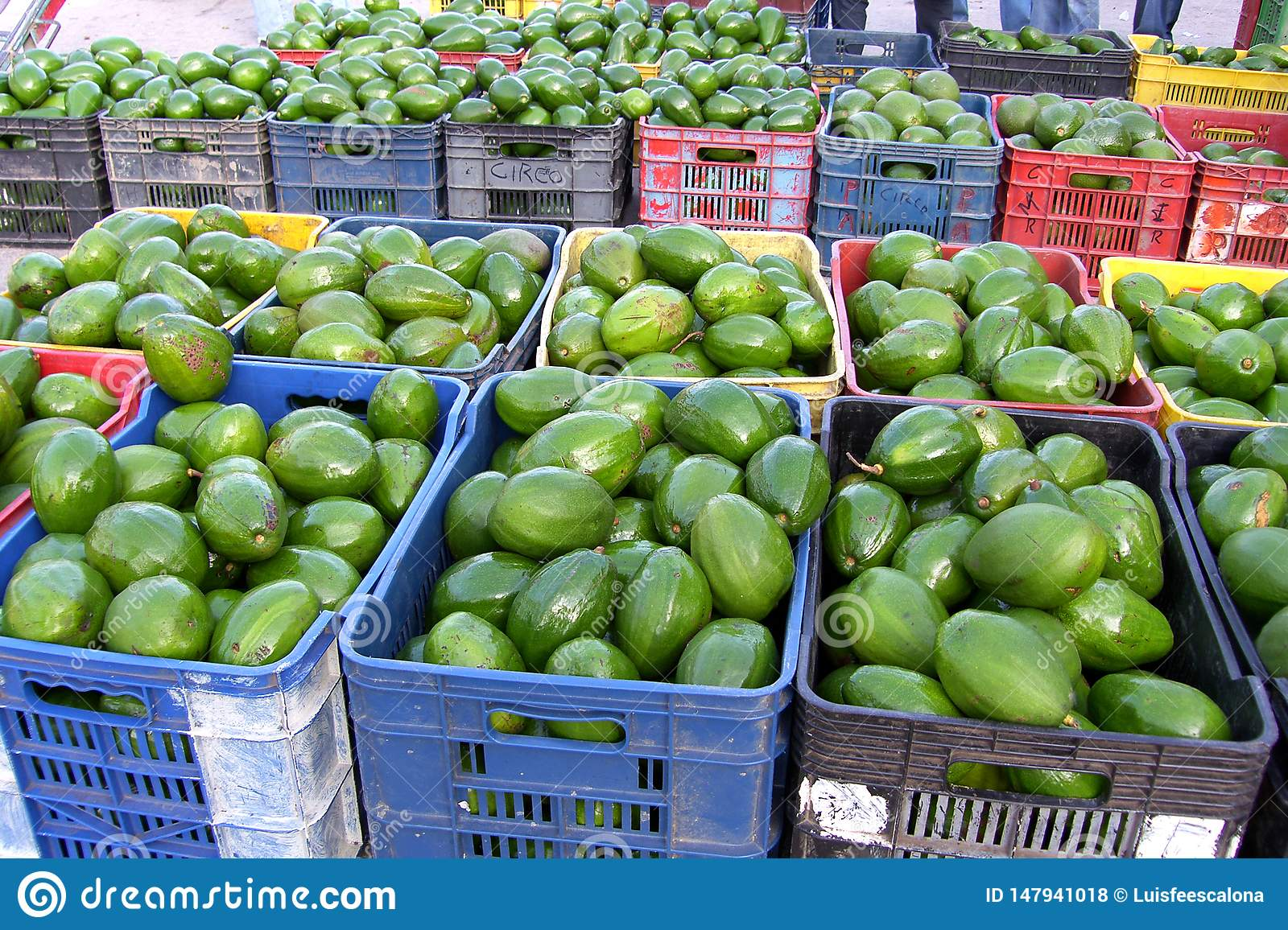 Avocados in the market