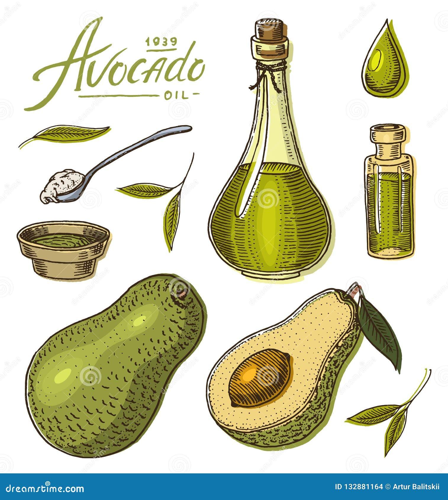 Piante Da Frutto Sempreverdi avocado tropicale metta della pianta da frutto sempreverde