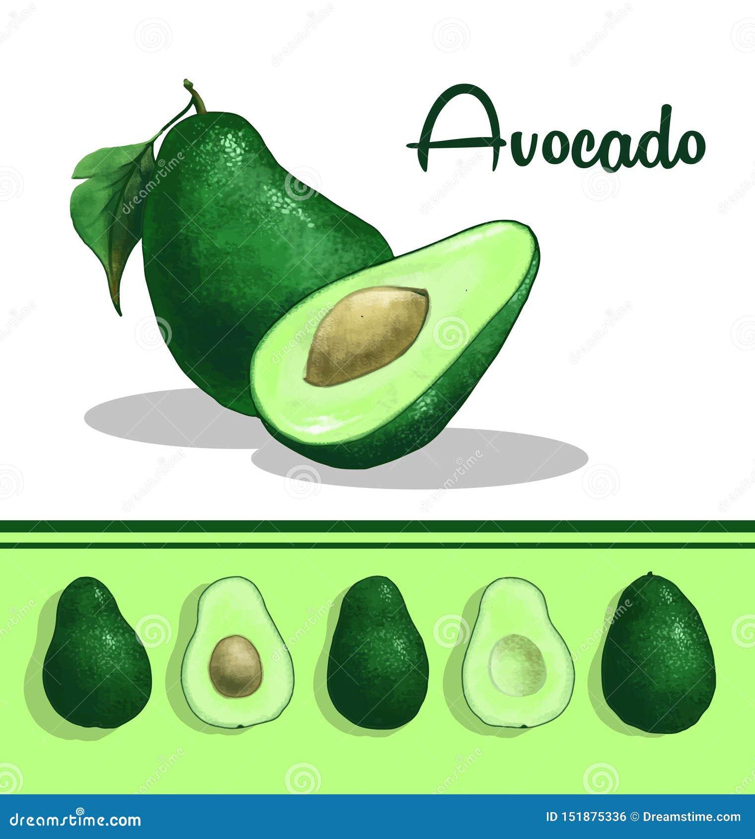 Avocadoclipart