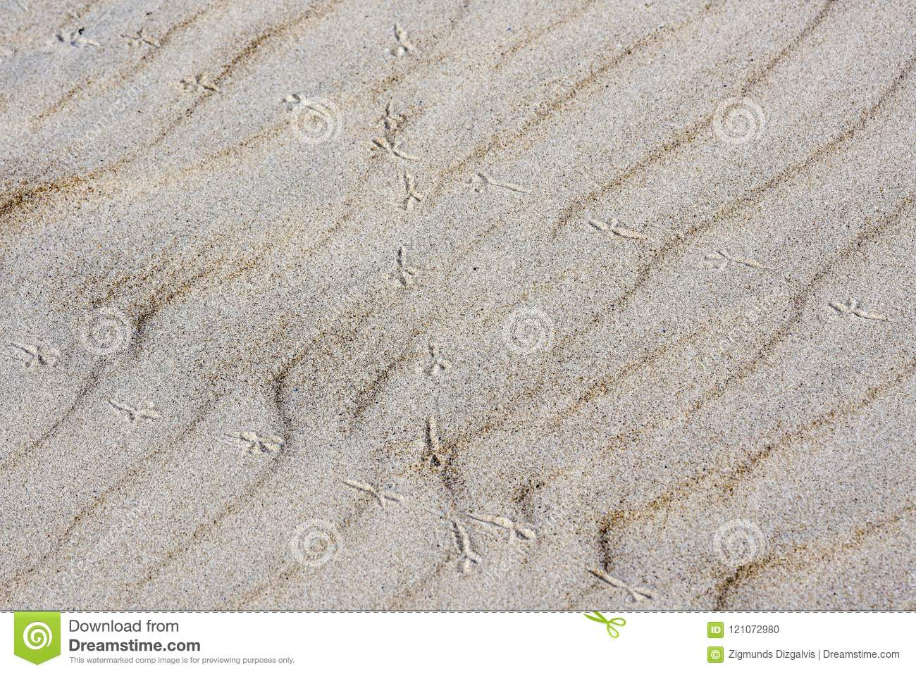 Background of sand, wind formed relief, bird footprints