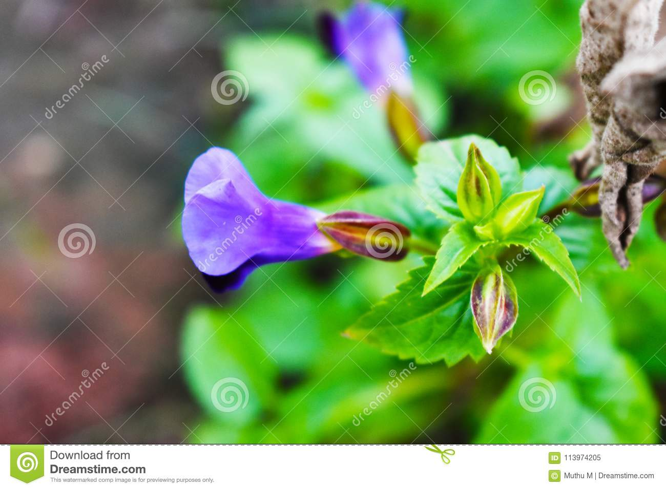 Awesome plants with lavender color flower