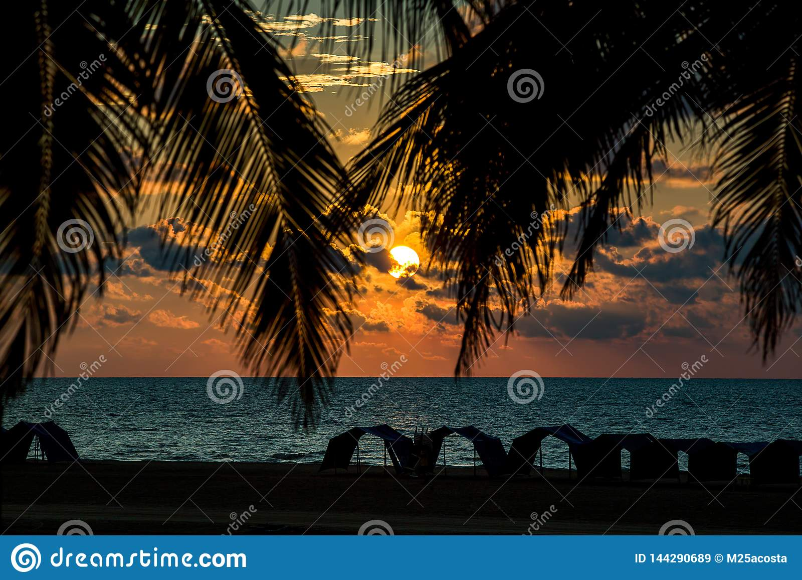 Sunset between the palm trees