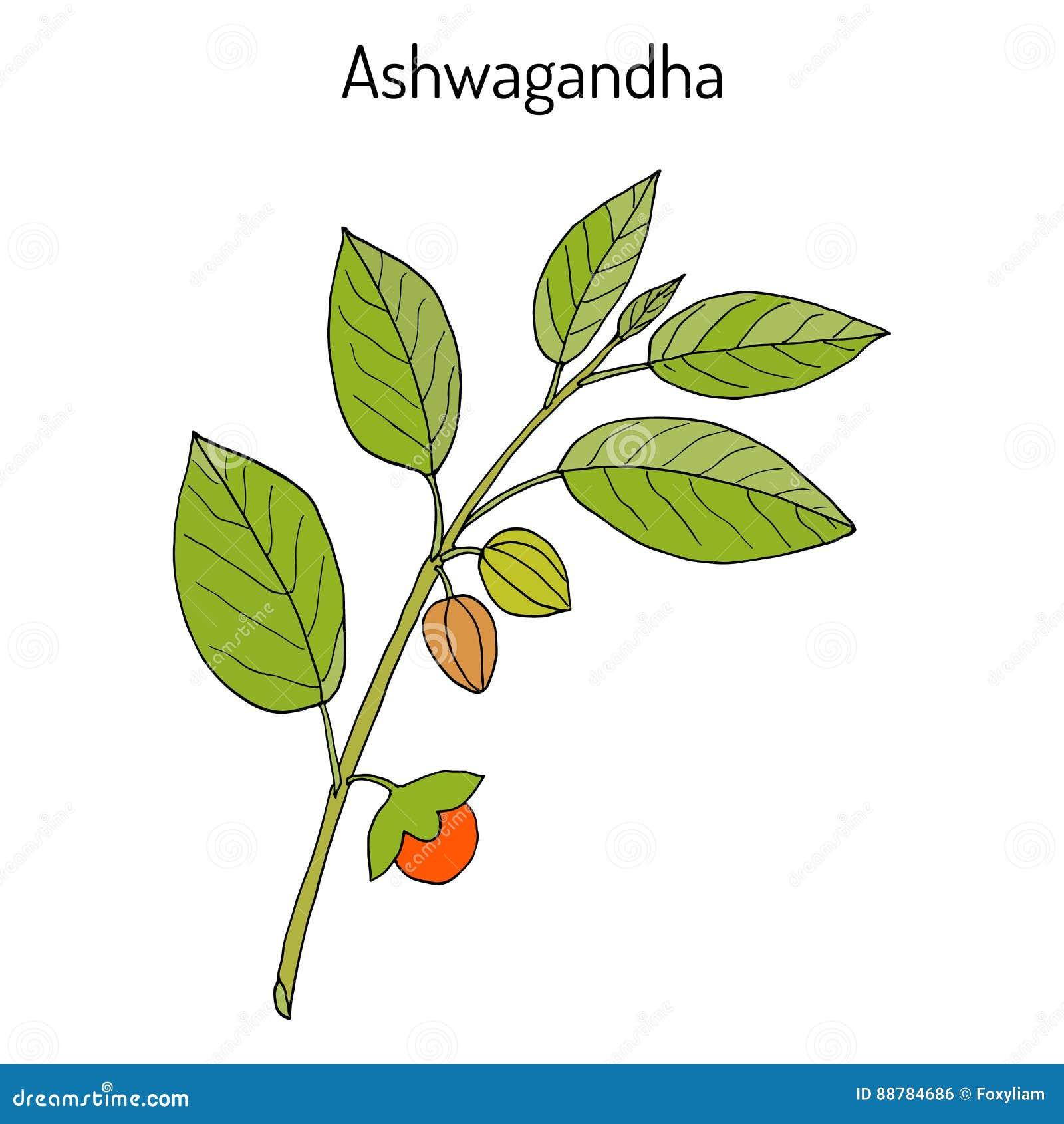 chloroquine phosphate tablets ip 500 mg in hindi
