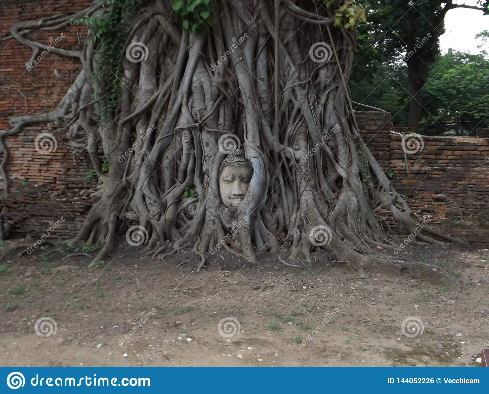 Ayutthaya, face in the tree