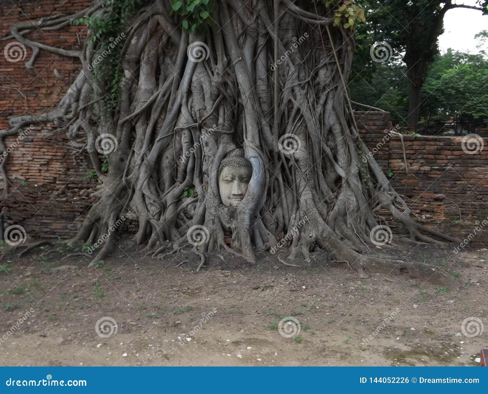 Ayutthaya, gezicht in de boom
