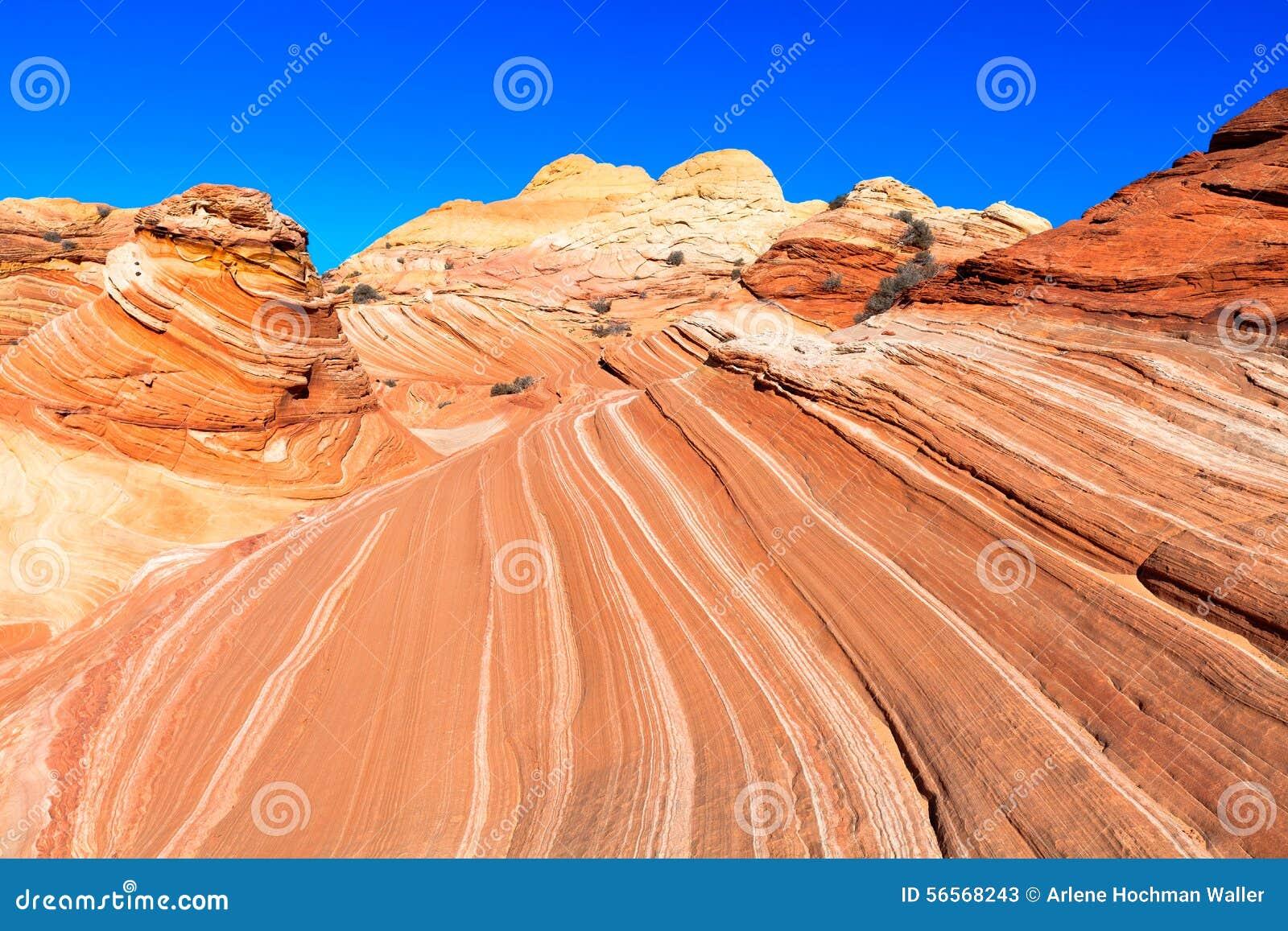 Download AZ-ν Coyotte το λόφος-κύμα στοκ εικόνα. εικόνα από ξεράνετε - 56568243