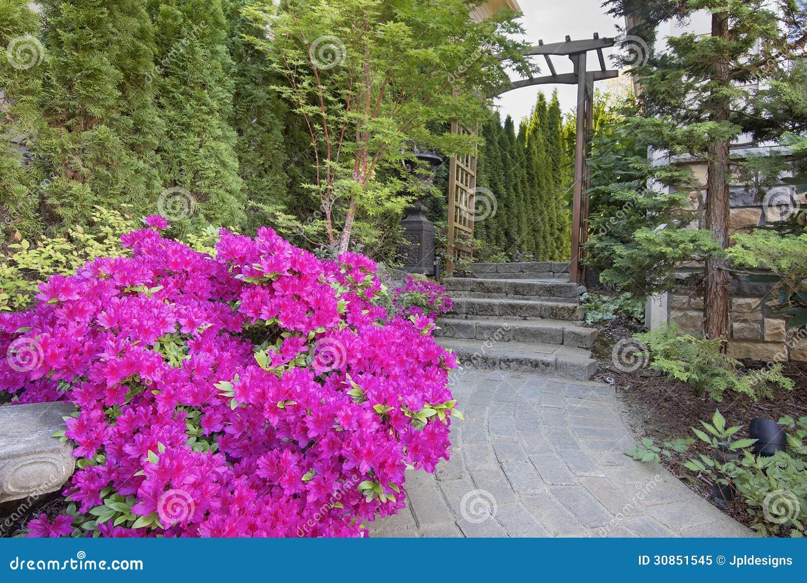 Azalées roses fleurissant le long du chemin de jardin