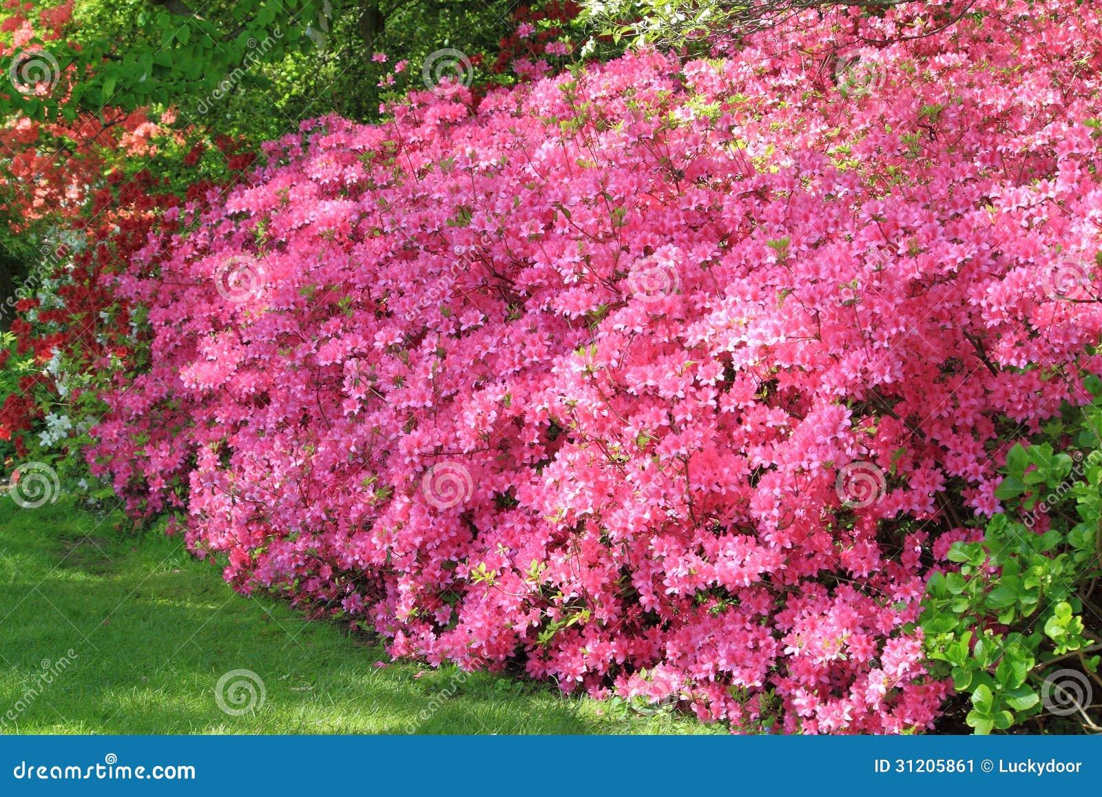 Azalea Flower Wall