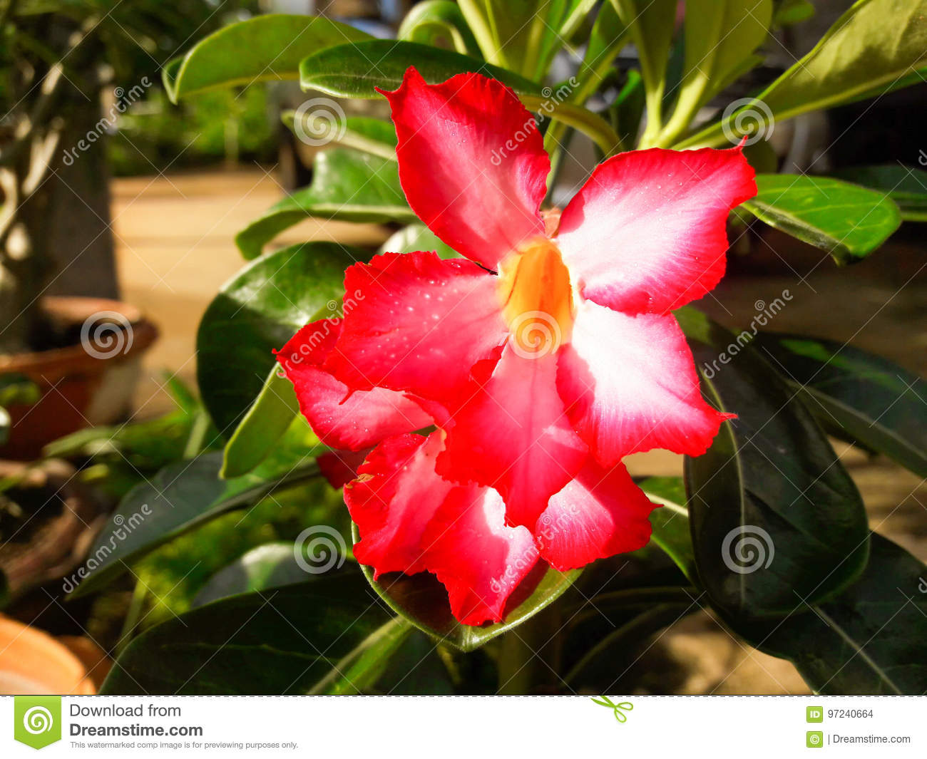 Azalea Flowers In Garden Bloom So Beautiful Stock Photo Image Of