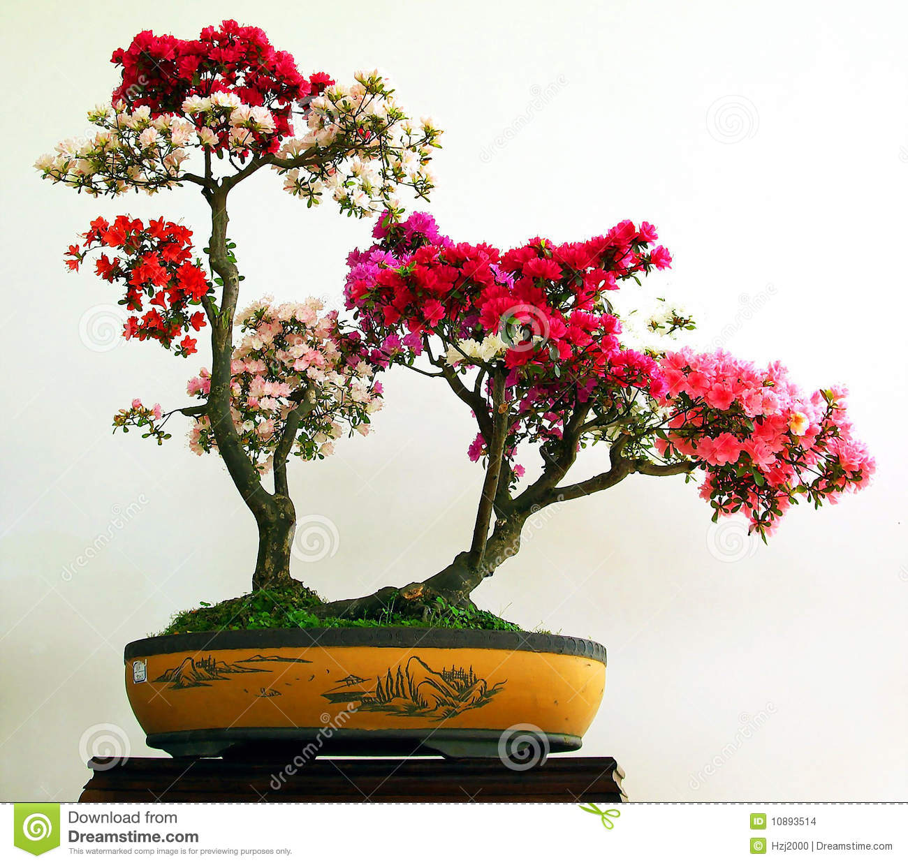 Azaleas bonsai stock images image 10893514