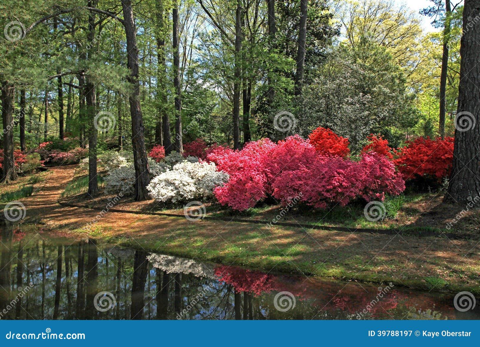 Azaleas At Callaway Gardens Stock Image Image 39788197