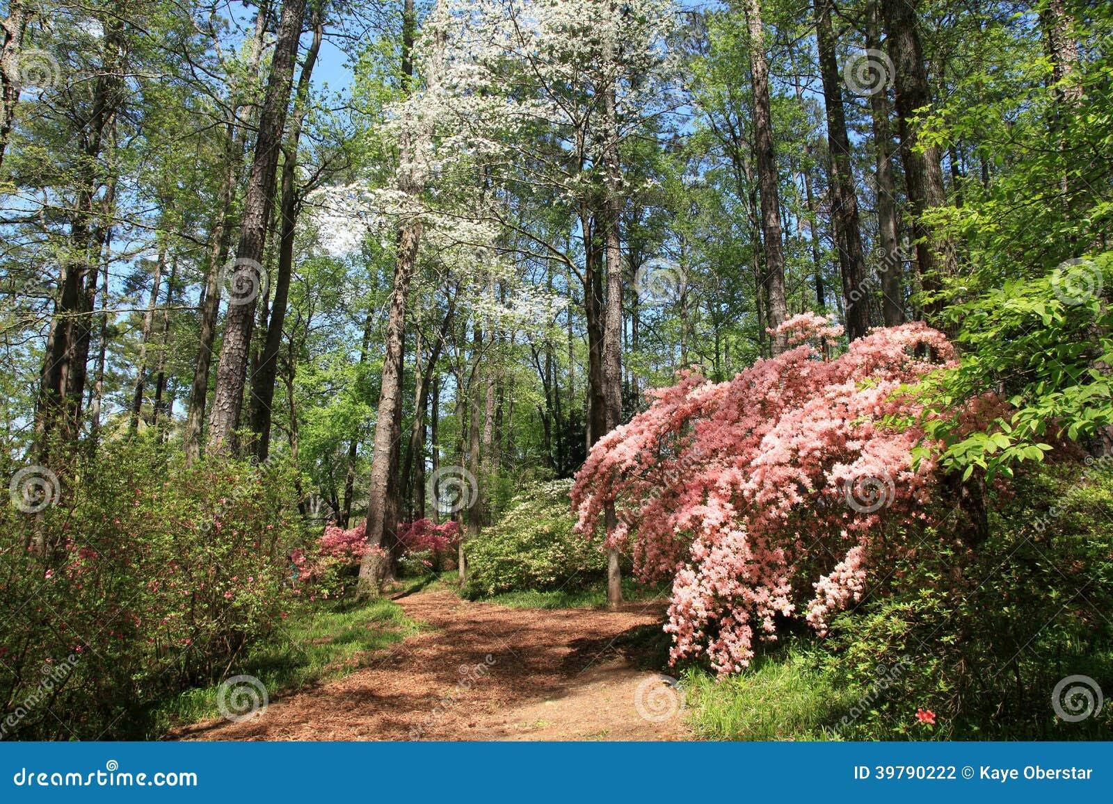 Azaleas At Callaway Gardens Stock Photo Image 39790222