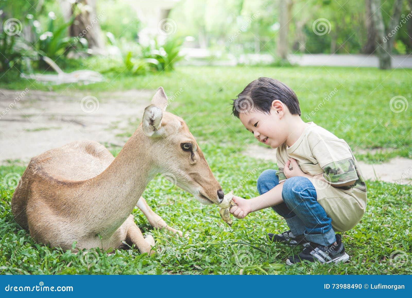 Aziatische kindervoedingsherten
