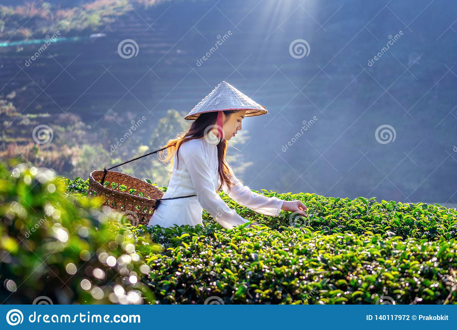 Aziatische vrouw die de cultuur van Vietnam traditioneel op groen theegebied dragen