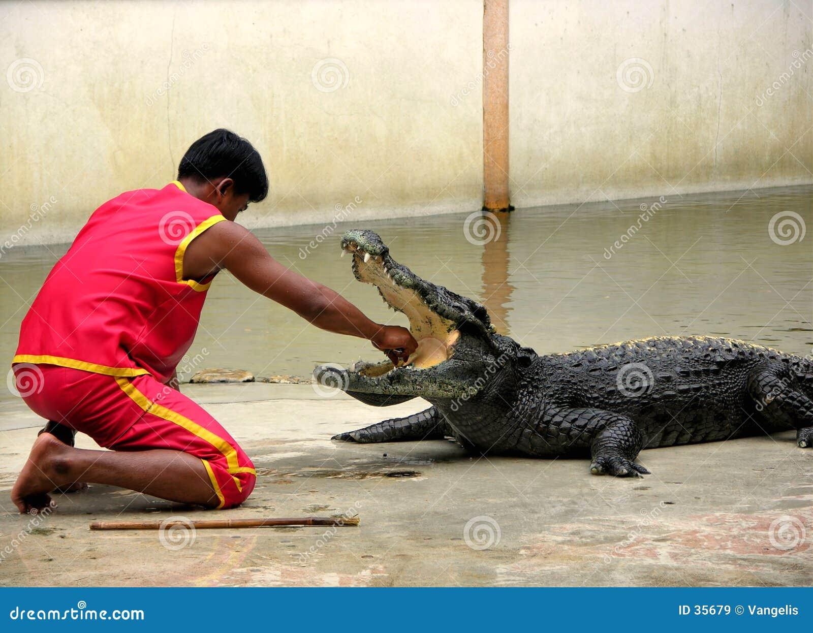 Azienda agricola del coccodrillo di Samutprakan e giardino zoologico 6