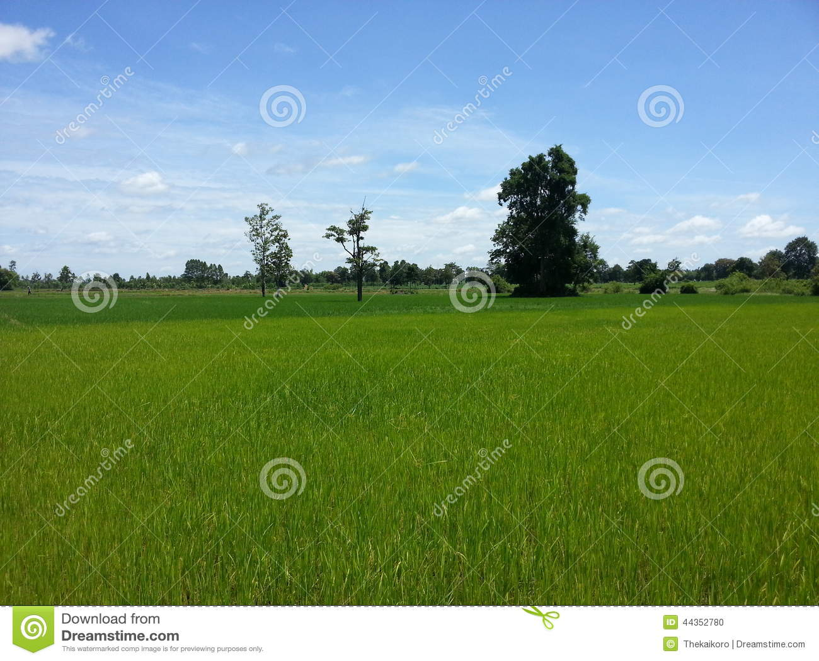 Azienda agricola del paesaggio di riso in Tailandia