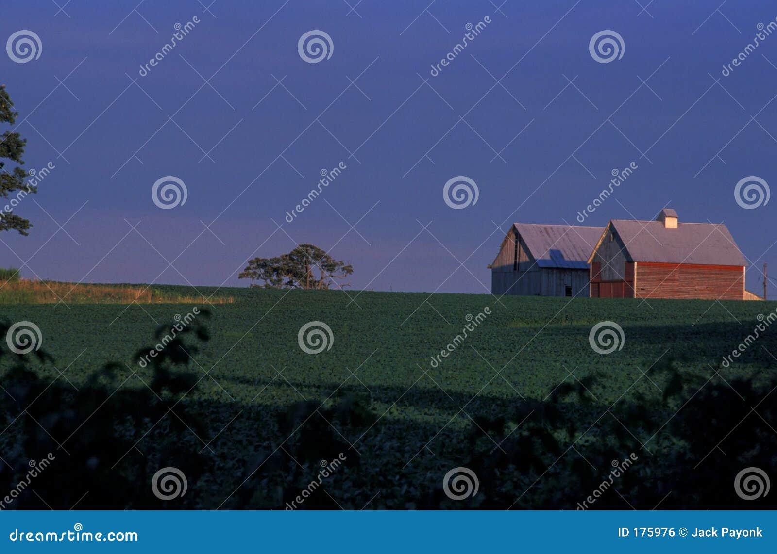 Azienda agricola dell Indiana