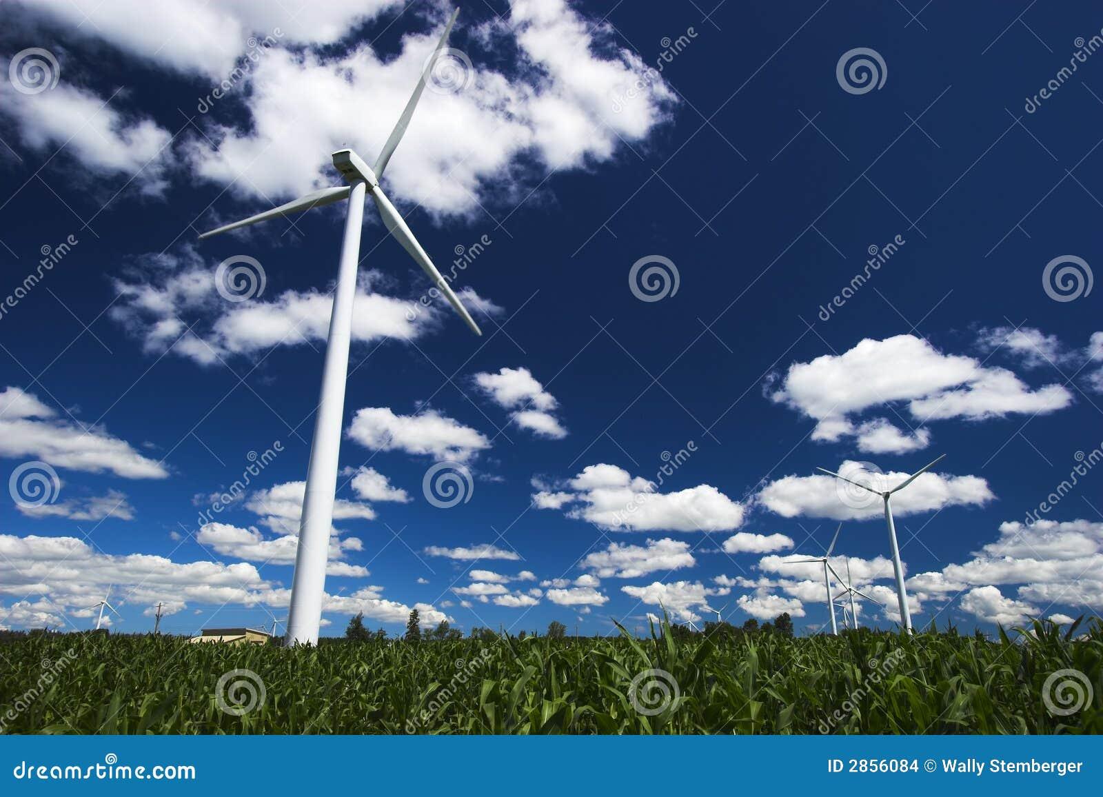 Azienda agricola di vento