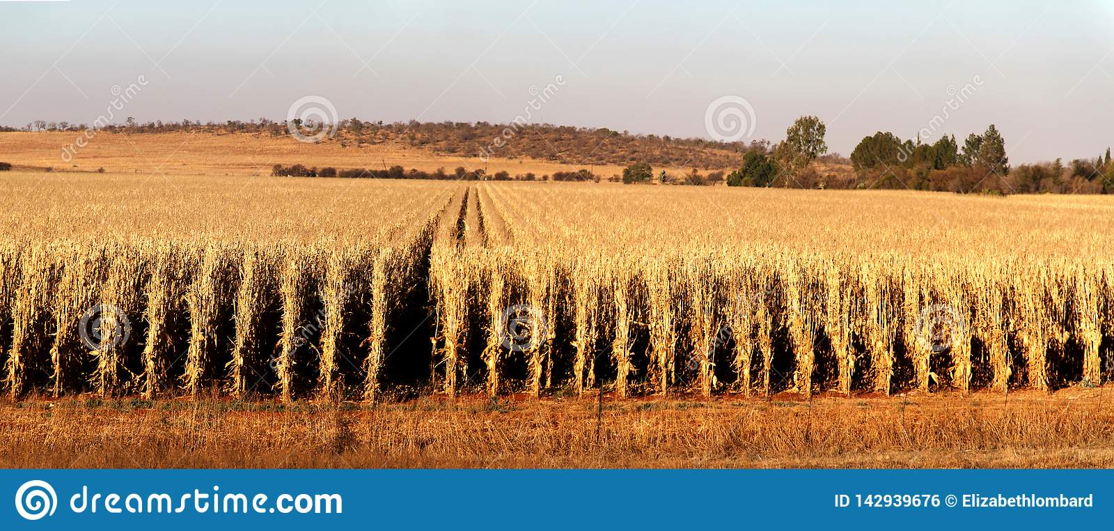 Azienda agricola a Potchefstroom, Sudafrica
