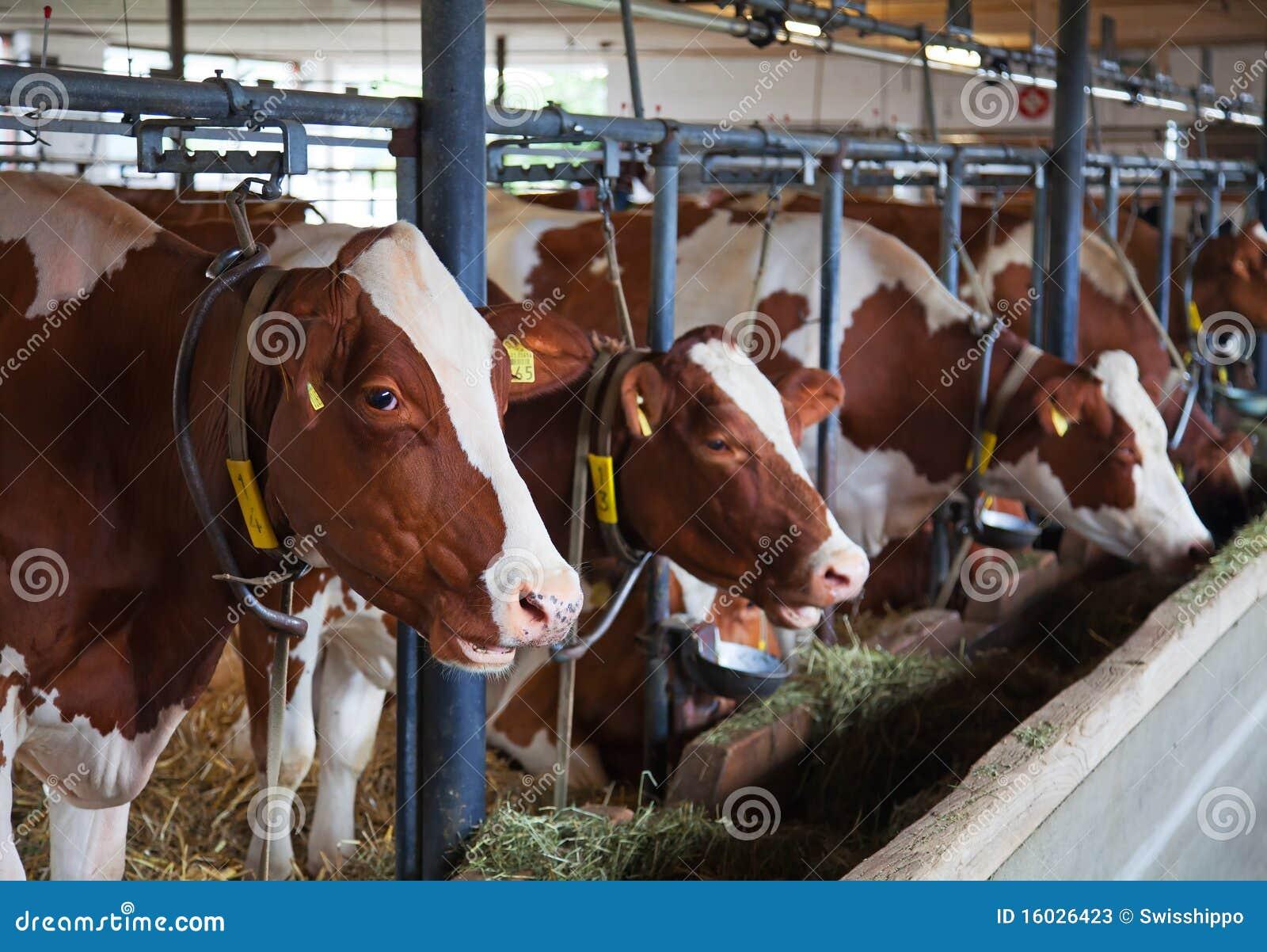 Azienda agricola svizzera